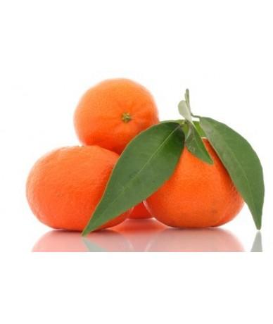 10 Kg. Clementina con Hoja